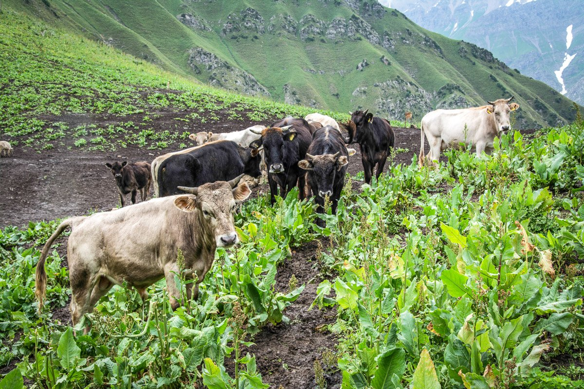 Sary-Chelek Horse Trek (4 Days), Makmal Pass - Jalal-Abad Region, Kyrgyzstan