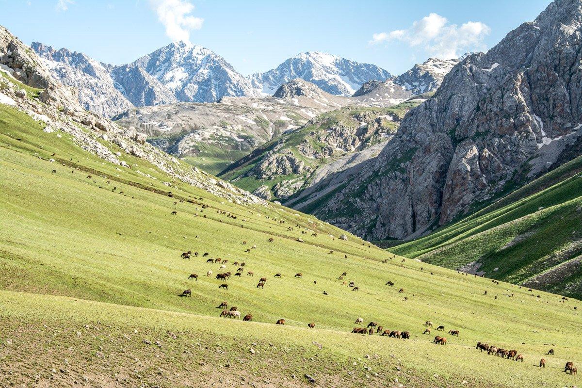 Ultimate Arslanbob Trekking Adventure, High Pastures Babash Ata Mountains - Jalal-Abad Region, Kyrgyzstan